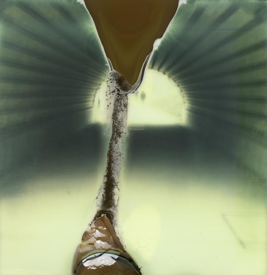 muses polaroids jan 1 (1 of 5)