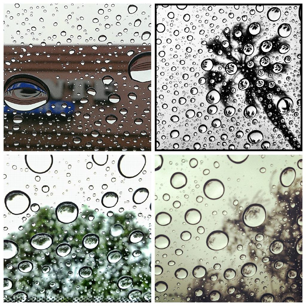 raindrops_by_Lindsey_Garrett