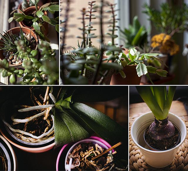6_plants