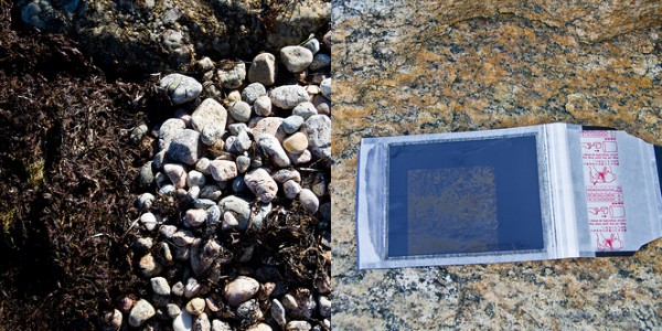 seaweed and rocks on Fuji instant film