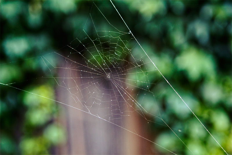 Spider-Web_rs