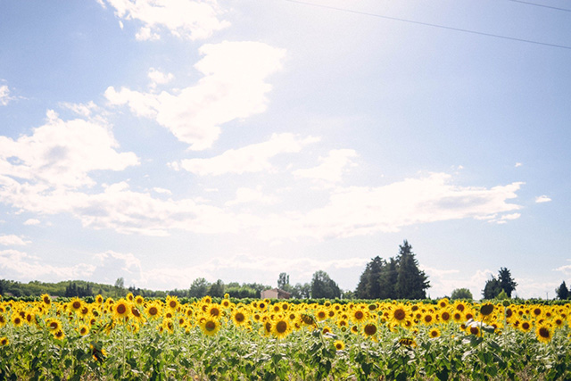Sunflowers_film