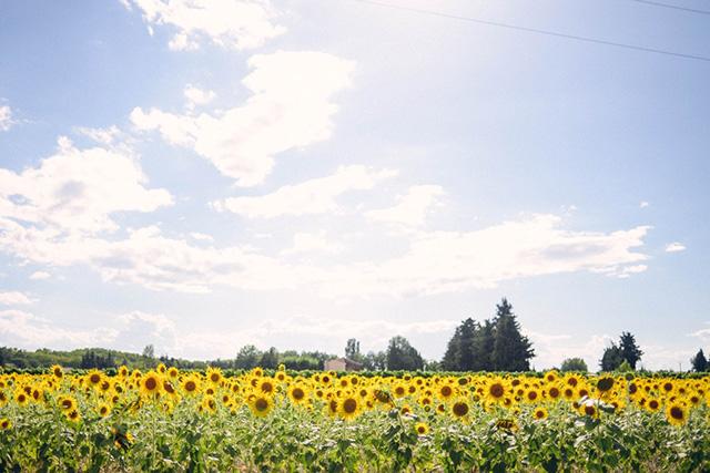 Sunflowers_film