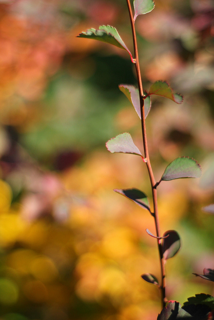 autumnbokeh-branch