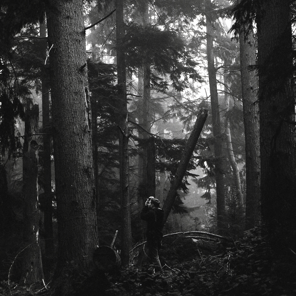 foggy forest holga autocord (3 of 5)