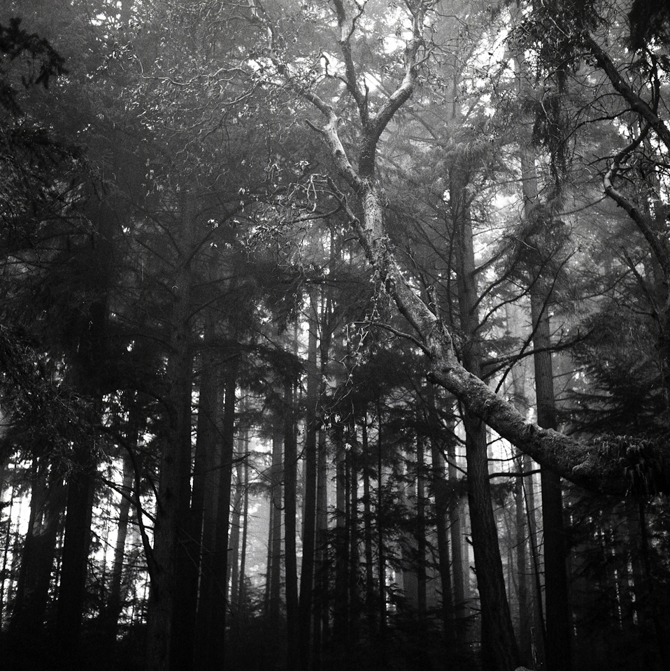 foggy forest holga autocord (4 of 5)