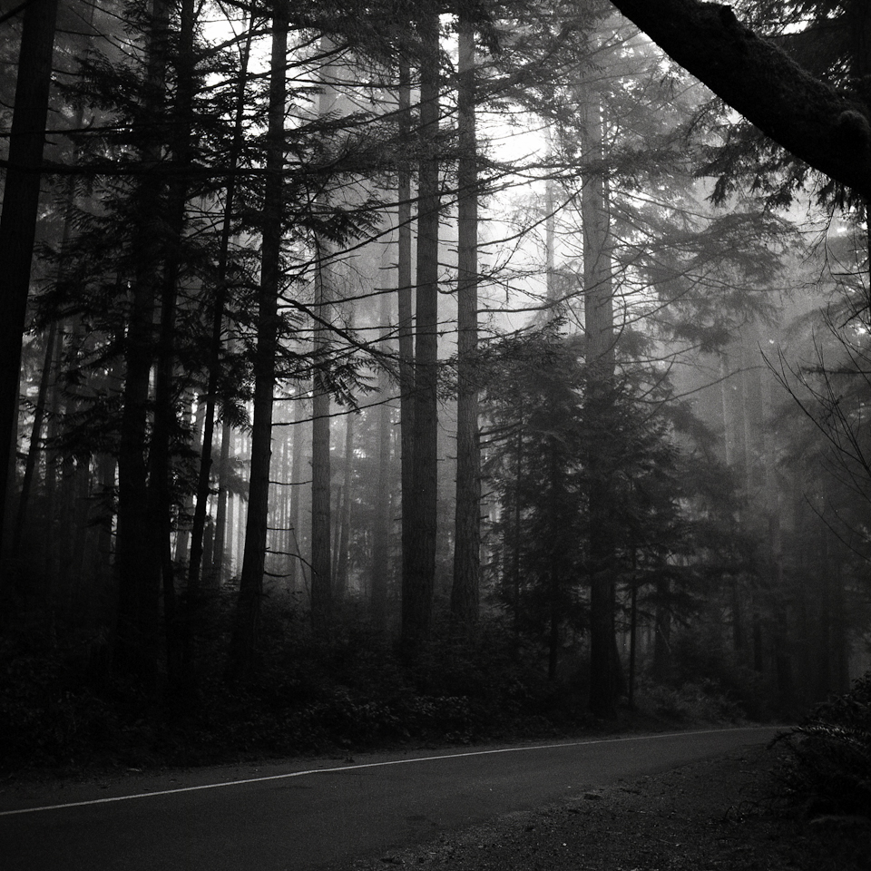 foggy forest holga autocord (5 of 5)
