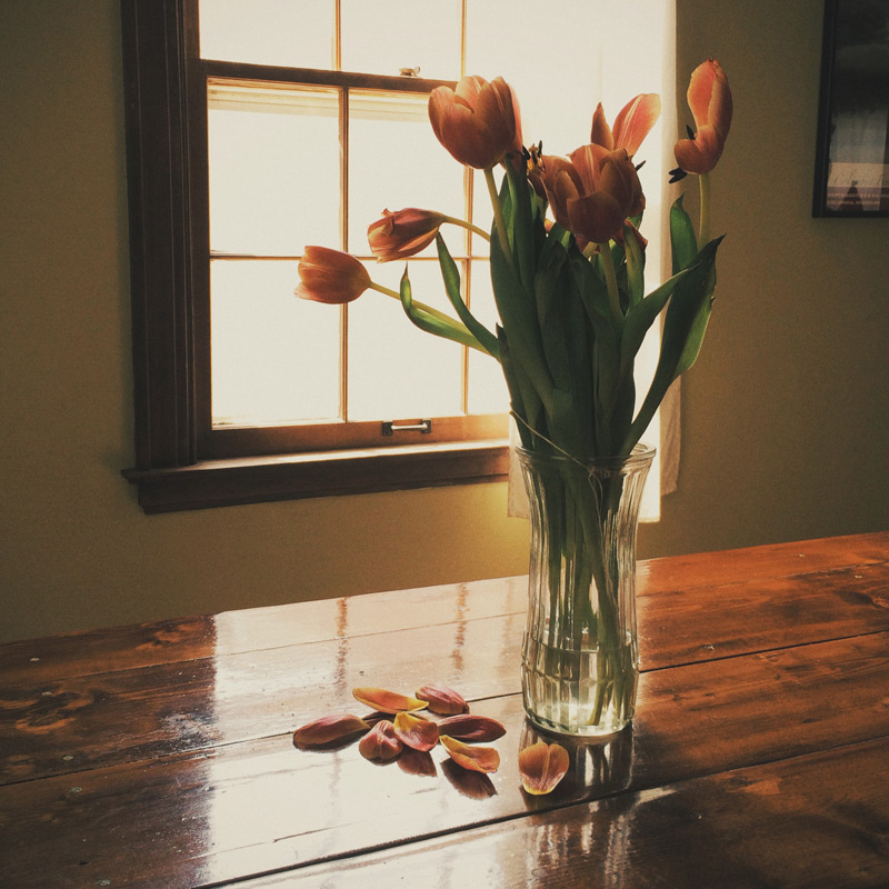 Dying-Tulips_rs