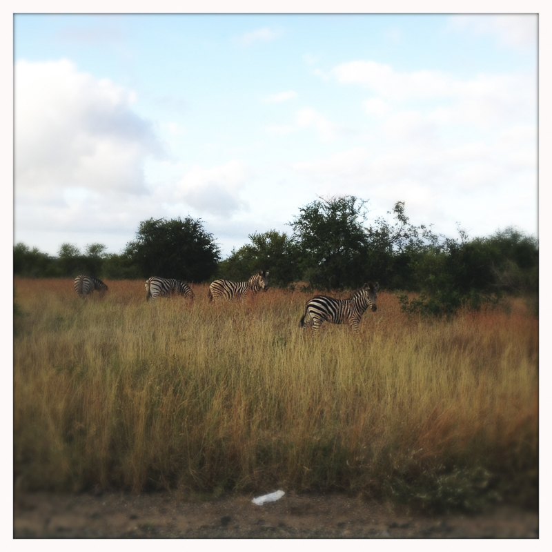 20120323_SouthernAfrica_1983