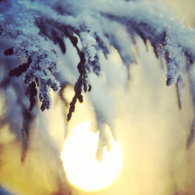 marianne-sunfrost